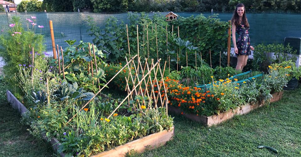 BUT-giardino-edibile