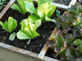 giardino-edibile