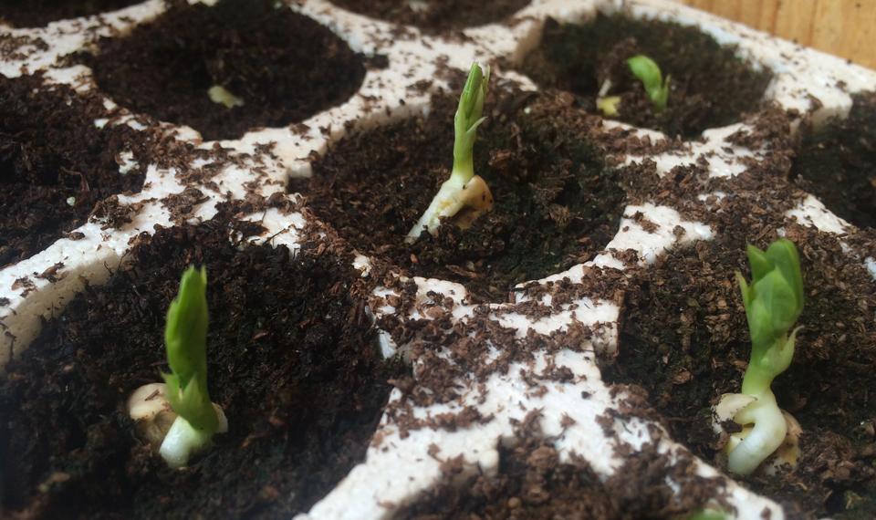 Il giardino edibile capitolo 4 semina o trapianto for Vasi per semina