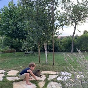 Cuccioli giocano in giardino.